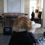 Tocktober | Texas, a cat in... Austin
