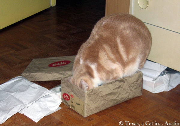 Wordless Wednesday: I'm Telling You It Fits!