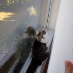 Kitshka hiding | Texas, a cat in Austin